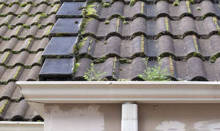how to stop moss from blocking your gutters - How To Kill Moss On Roof