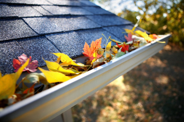how to avoid pests in gutters